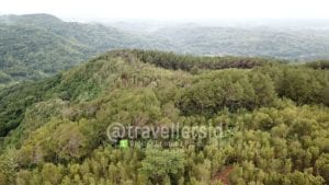 Pine Forest at Becici Peak, Bantul, Jogja, Indonesia